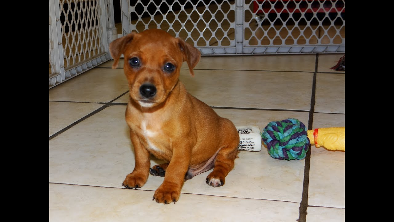 Craigslist Dogs For Adoption - Year of Clean Water