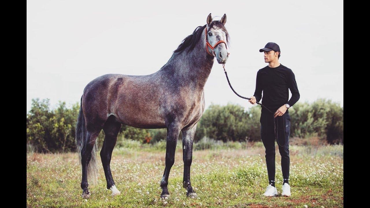 i-bought-a-stallion