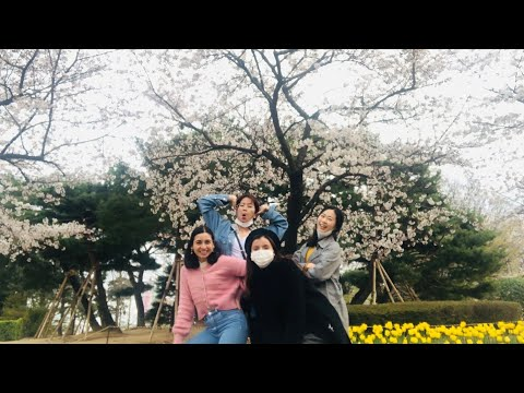 CHERRY BLOSSOMS IN KOREA!