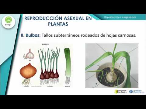 Reproducci n asexual definition