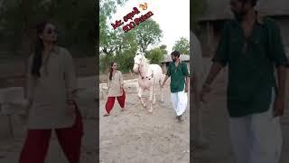 Mr. & Mrs. કણબી 🐎  Horse Lover  super Gujarati song  Mitul patel 9824231927