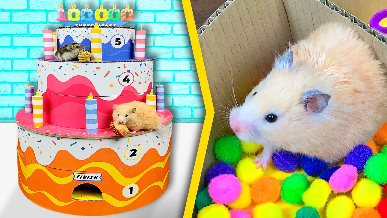 Download Hamsters in a 5 - Level Cake - Maze