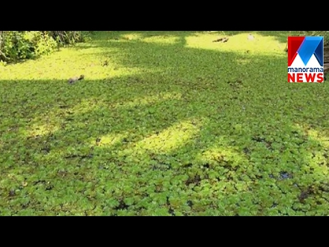 The Removal Of Eutrophication  From Waterways Will Increase The Chance Of Drought  | Manorama News