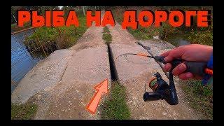НЕОБЫЧНАЯ РЫБАЛКА посреди ДОРОГИ !!!