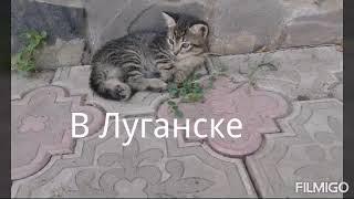 Отдам бесплатно  котёнка в хорошие руки в Луганске