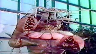 Download lagu VENUS FLYTRAP | The Revenge of Dr. X | Body of the Prey | Full Length Sci-Fi Movie | English | HD