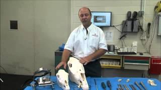 Dental Care for Horses