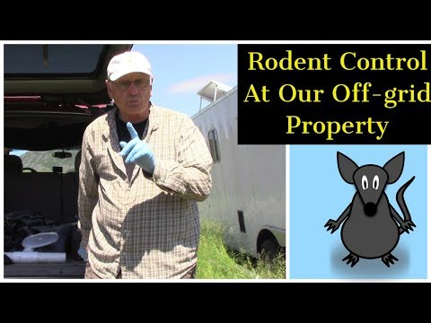 rodent-control-at-our-off-grid-property!
