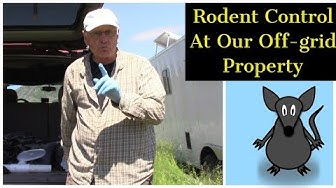 Rodent Control At Our Off Grid Property!
