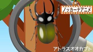 森でカブトムシやクワガタをみつける子供向けアニメです。珍しいカブト...