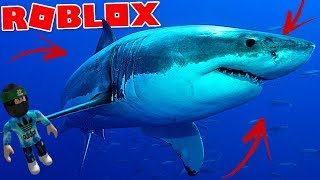 How not to play shark bite-ROBLOX