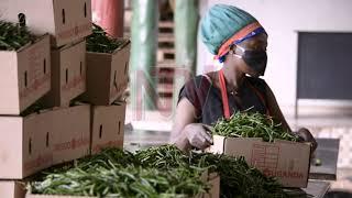 NATIONAL INDUSTRIAL POLICY: Uganda charts path for industrial led growth
