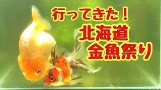 【再UP】北海道金魚祭りに行ってきた!