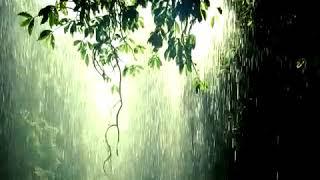 صوت المطر روعه وهدوء تام..اخواني الكرام ارجوا الاشتراك بقناتي ولكم مني جزيل الشكر