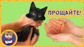 Последнее видео со спасенной черной кошечкой. Отдаем котенка Тучку в новый дом, в добрые руки