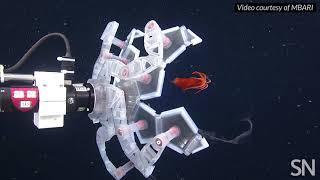 This robot catches deep-sea creatures Pokémon-style | Science News