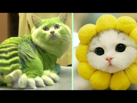 💗Meow - Cute Kittens Video Compilation🐱 #cutest monemt of funny cats