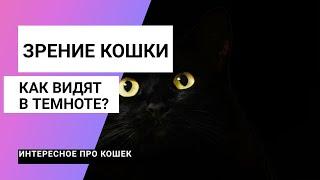 Зрение кошки - мир глазами кошек/ Как кошки видят в темноте