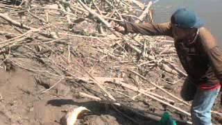 la pesca en el rio ichilo