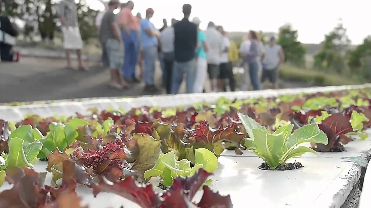 Aquaponics Is EASY With Our Systems - Friendly Aquaponics