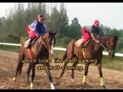 ทีวีบูรพา กบขึ้นเครื่อง : โลกของม้าแข่ง (English Subtitle) EP.2