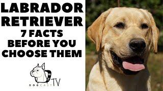 Before you buy a dog  LABRADOR RETRIEVER  7 facts to consider! DogCastTV!
