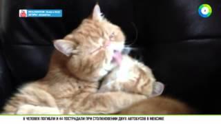Видеоролик с целующимися котами стал интернет-хитом