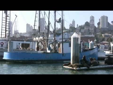 Sharkfest Swim from Alcatraz, San Francisco Travel Video Guide: