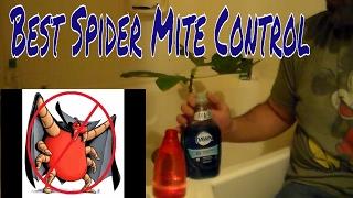 Best Spider Mite Control