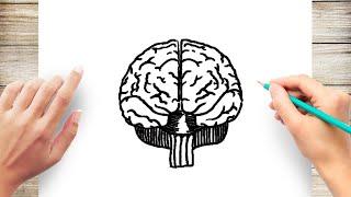 How to Draw Huṁan Brain