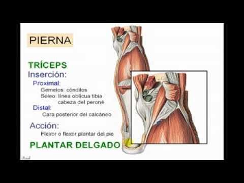Miologia de Miembro Inferior 8 Diagnostico X - YouTube