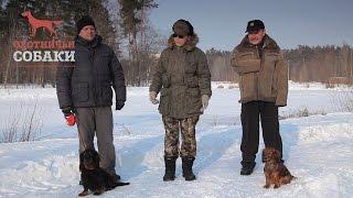 Охотничьи собаки. 12 серия. Длинношерстная Такса