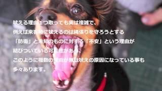 犬のしつけや飼う上で役に立つ情報をお届けしています。 situke-onayami...