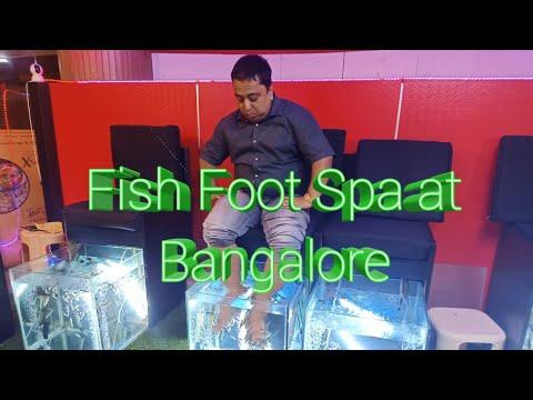 Fish Foot Spa At Lido Mall, Bangalore