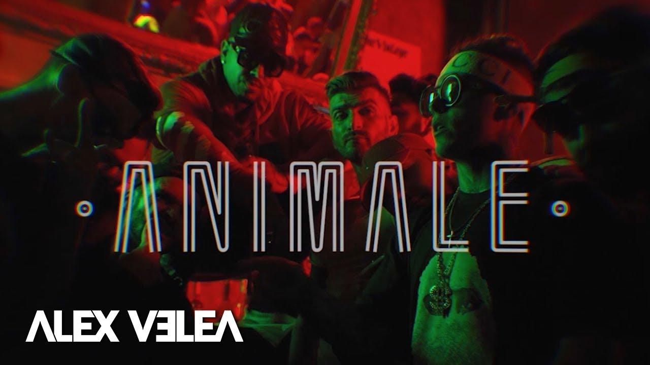 Alex Velea - Animale   Official Video