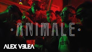 Alex Velea - Animale | Official Video