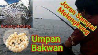 Mancing Kiper/Kedhot/Ketang-ketang Di Jakarta Bareng MBFC (Muara Baru Fishing Club)