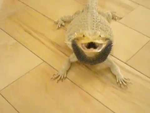 Bearded Dragon Craft Google Search Colors T Reptile Crafts