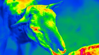 Workswell - Animals in the ZOO | World in InfraRed