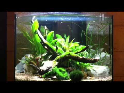 Acquario 50 litri tropicale acqua dolce aquaproject andria for Acqua acquario