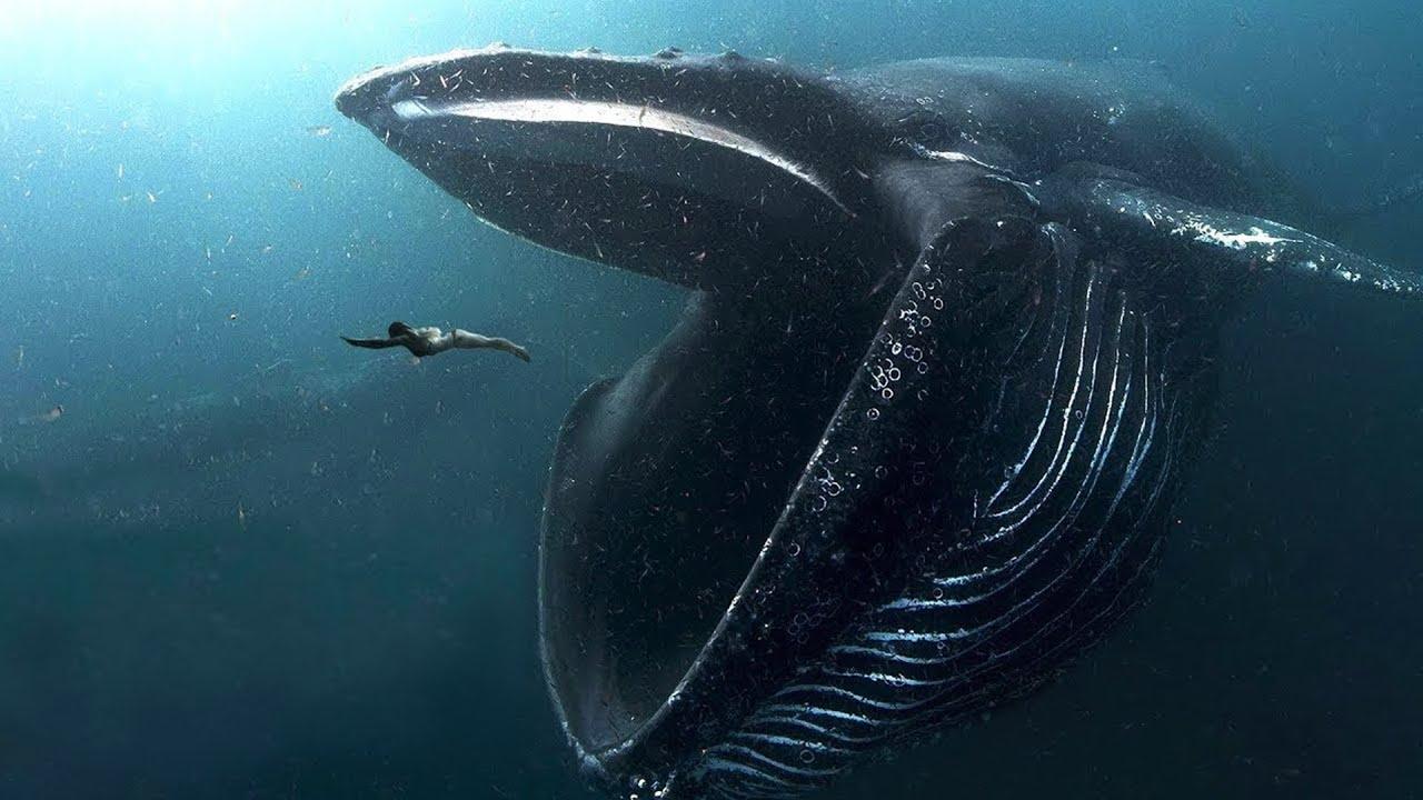 10 BIGGEST Ocean Creatures In The World