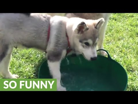 Puppy bewildered by first water playtime experience
