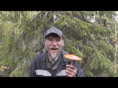 Я грибабас, гроза грибов