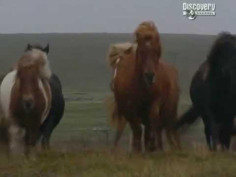 Download Time Team   Season 10, Episode 4   The Giant's Grave Fetlar, Shetland Islands