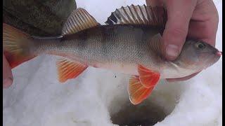 поливное озеро есть ли тут рыба