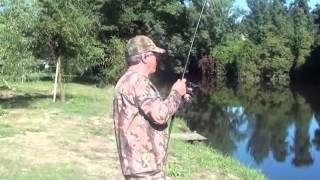 pesca as carpas no rio ave