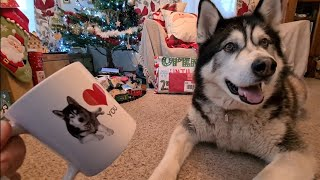 Husky Malamute Kicks Off when I suggest a gift for his sister