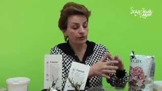 Как сажать азалии рододендроны(Как сажать азалии (рододендроны), купленные в магазине. Какая почва нужна для рододендронов? Как сохранить..., 2015-04-04T08:00:00.000Z)