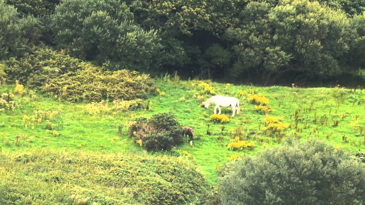 A real unicorn sighting! - YouTube  A real unicorn ...