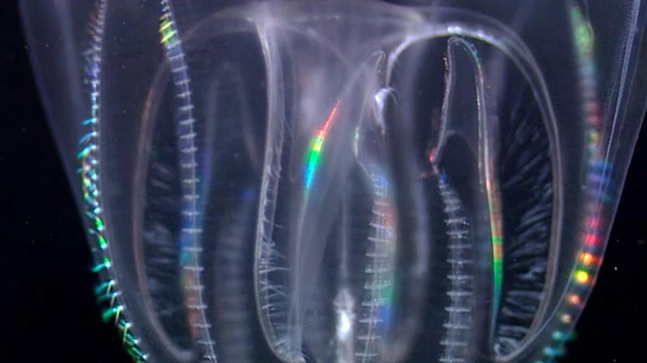 Weird Ocean Predators Feed On Plankton | Blue Planet | BBC Earth